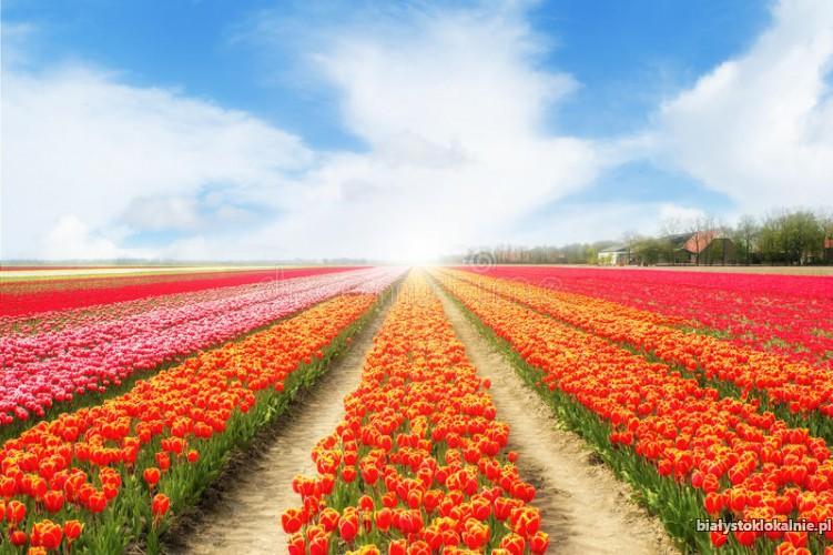 Praca przy kwiatach!! Zapewnione zakwaterowanie!! Holandia!!